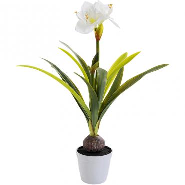 Planta Decorativa Amaryllis...